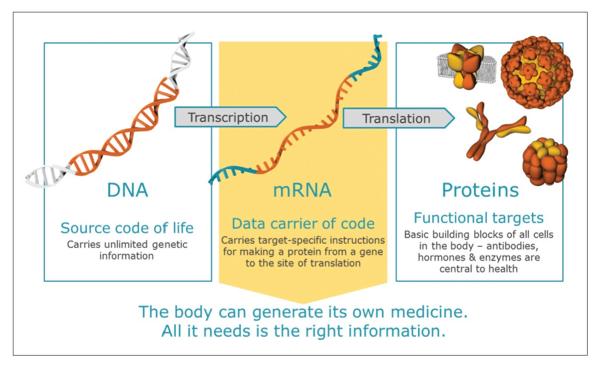 DNA-mRNA-Proteins